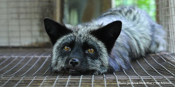 Make Britain fur free! #FurFreeBritain!