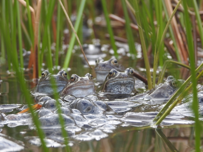 frogs by Andrew Tilsley