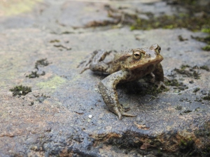 toad by Andrew Tilsley