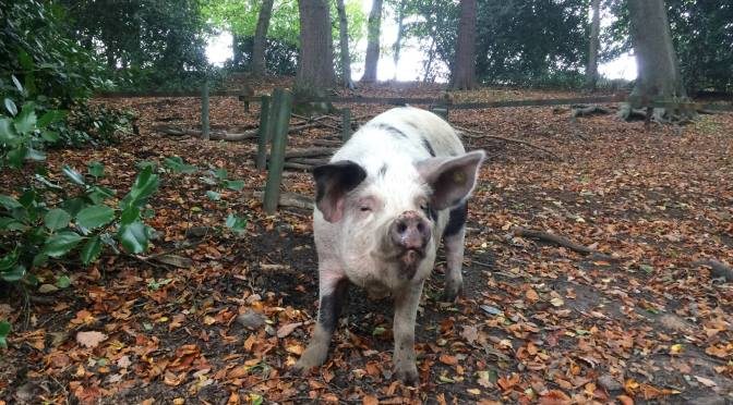 """21 Apr: Visit """"Pigs in the Wood"""" Animal Sanctuary"""