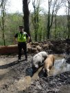 Pigs in the Wood 9