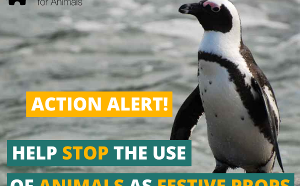 Petition: Penguins are not props!