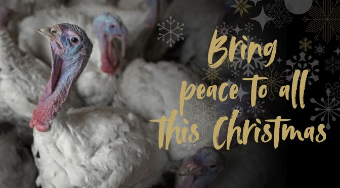 7 Dec: Peace at Christmas, stall in #HebdenBridge