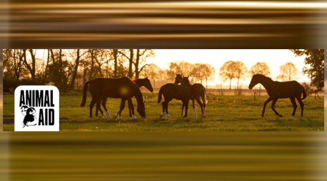 Horses slaughtered in the UK: petition from Animal Aid